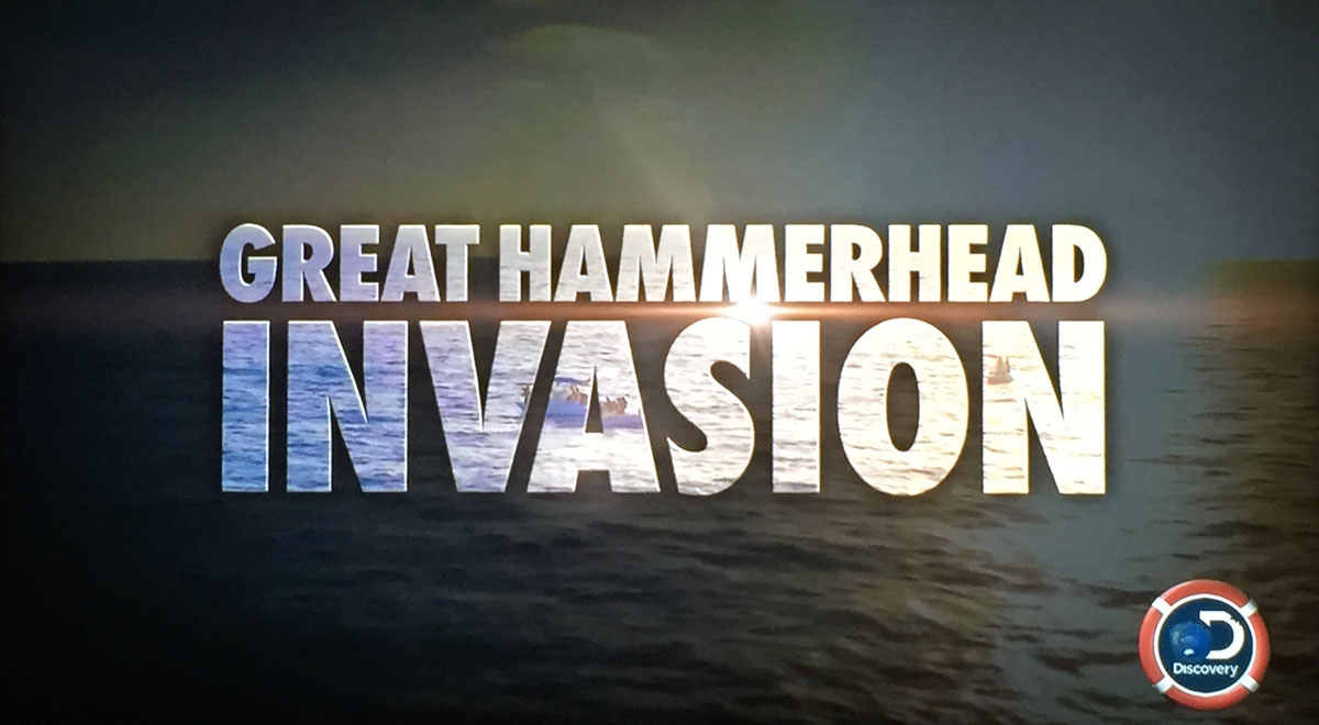 Hammerhead - During this show Tristan tells the fascinating story of the enigmatic great hammerhead shark. Why do females return annually to bimini? Are they pregnant? Do they migrate north for the summer months?