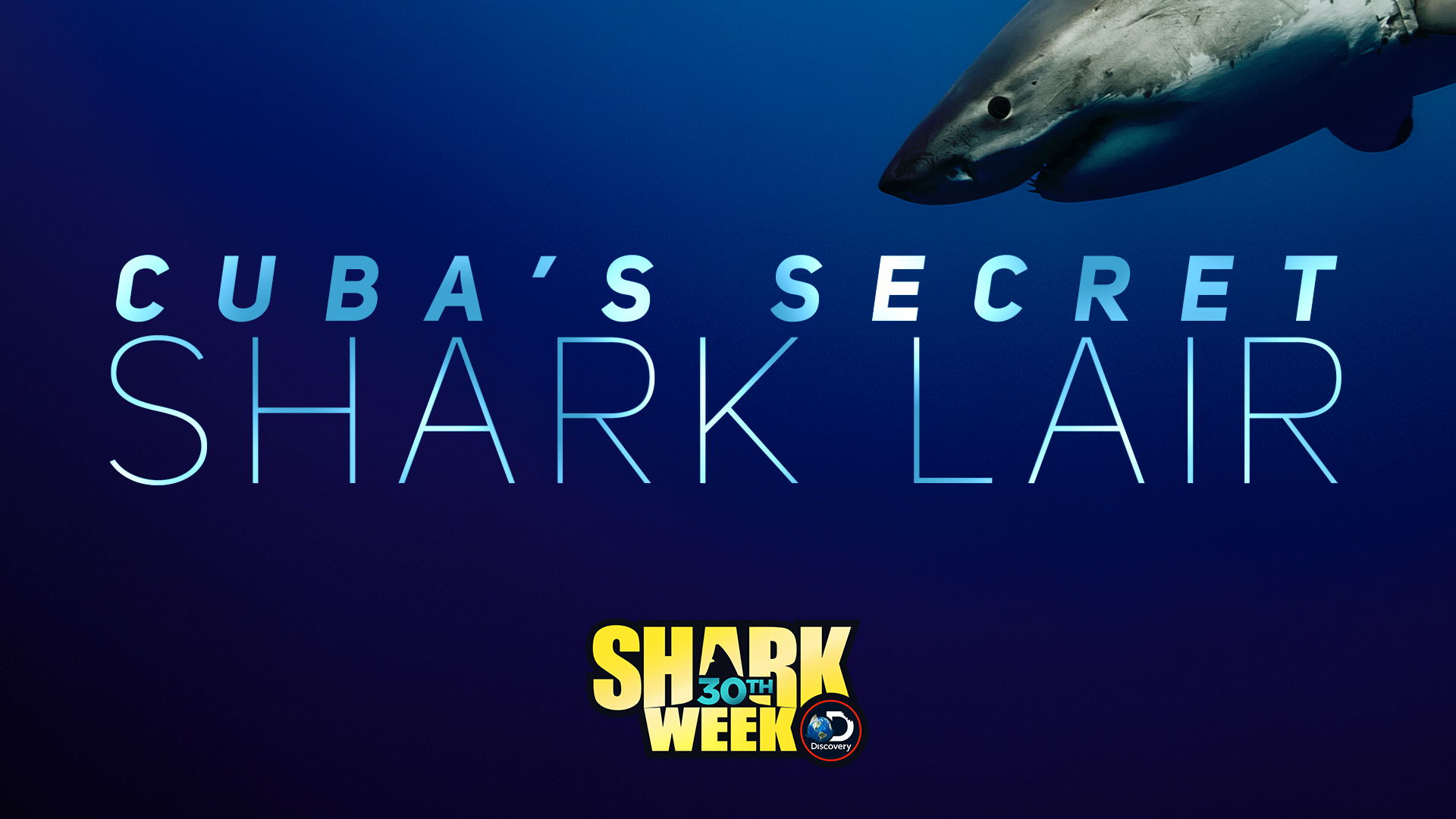 Cuba's Sharks - Exploring the pristine habitats of the 'Gardens of the Queen' Tristan leads the search for the famous great hammerhead that hunts the plentiful and healthy marine life in this exquisite location.