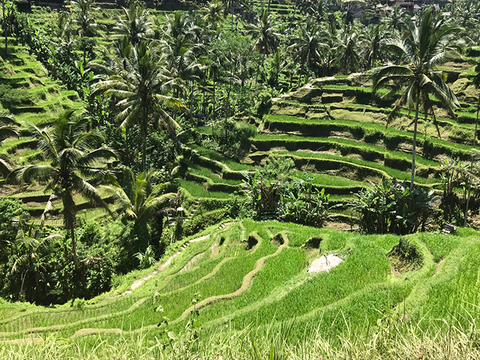 Hike Ubud's stunning rice terraces