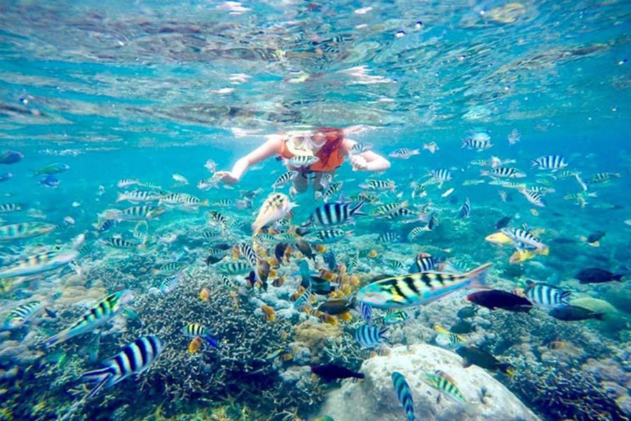 Snorkel Lembongan Island