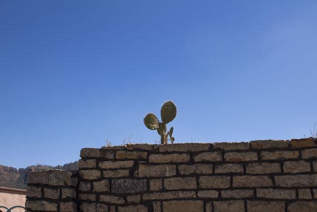 cactus_wall.JPG