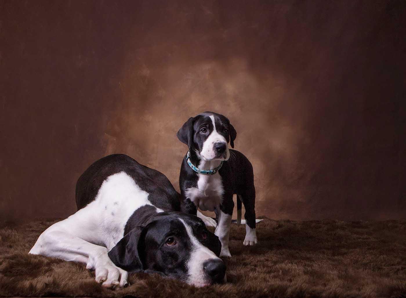Dog-Photographer-St-Louis-1.jpg
