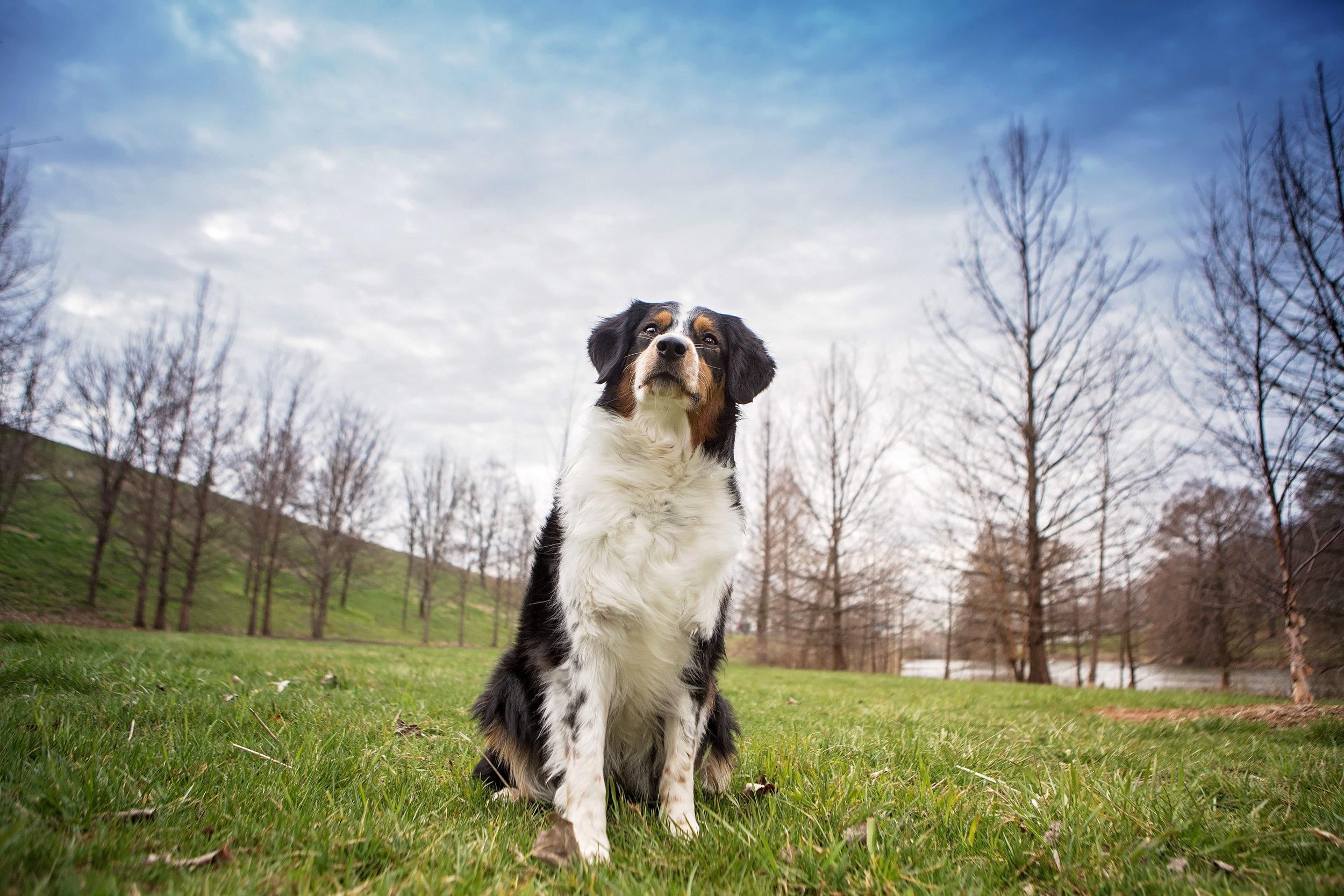 Dog-Photographer-Ballwin-Missouri.jpg