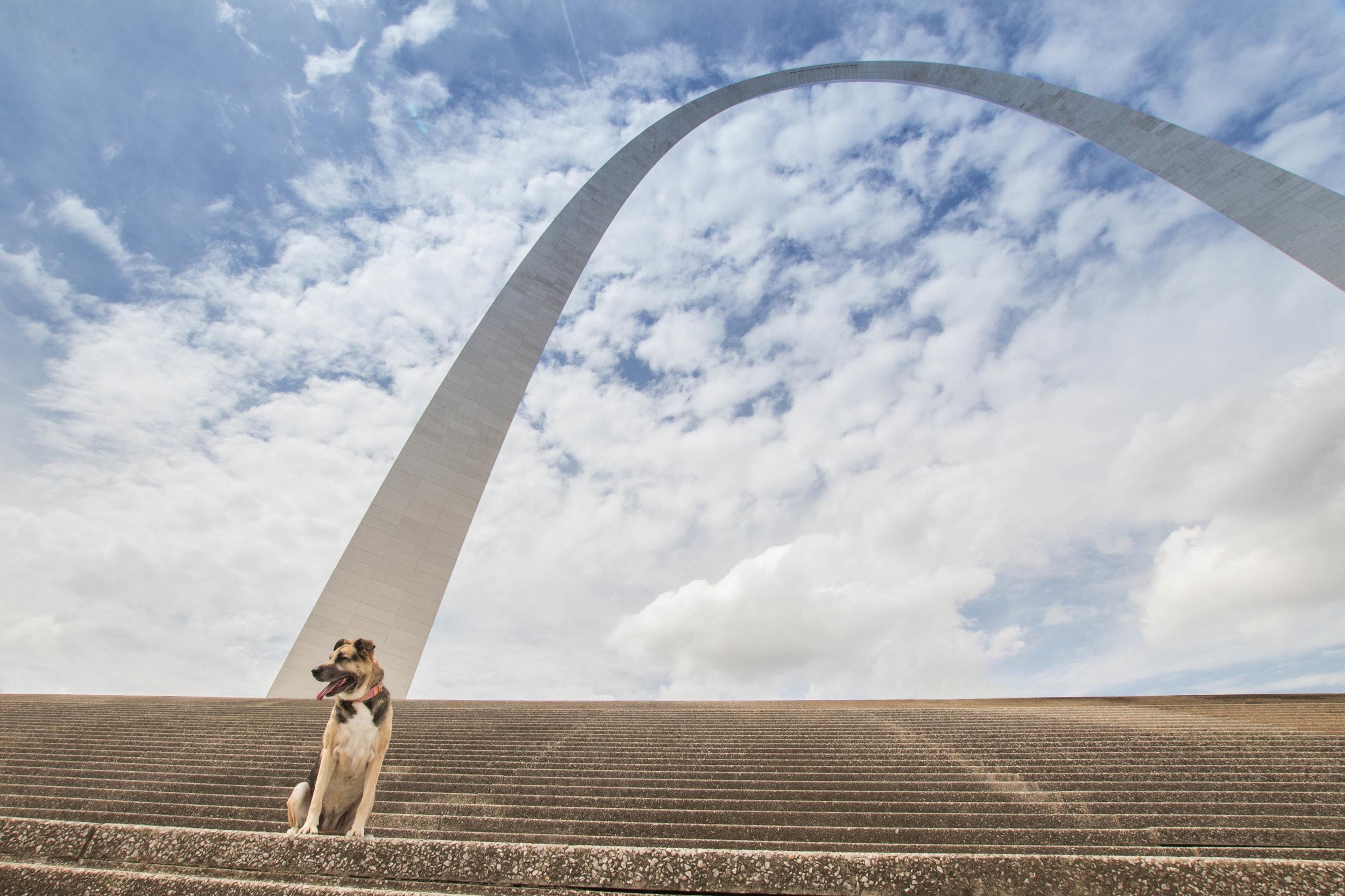 St_Louis_Dog_Photogapher_002.jpg