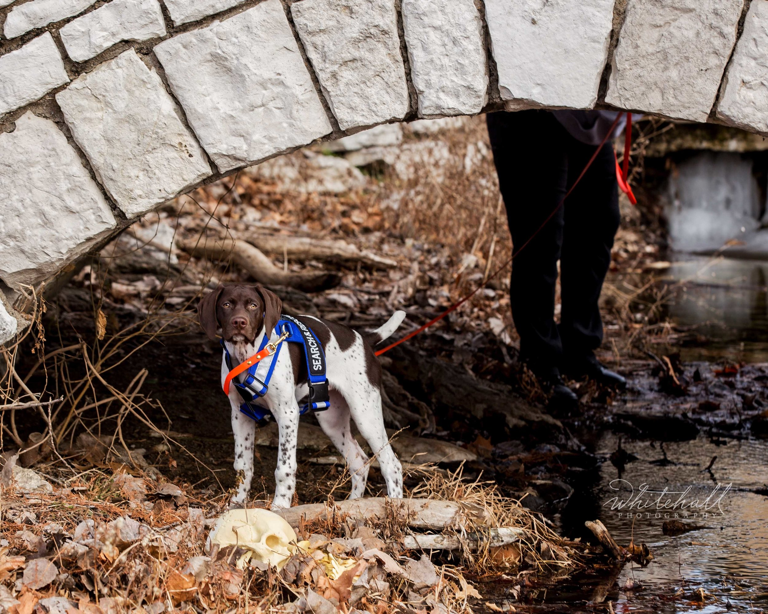 St_Louis_dog_photographer_search_and_rescue_004 tm.jpg