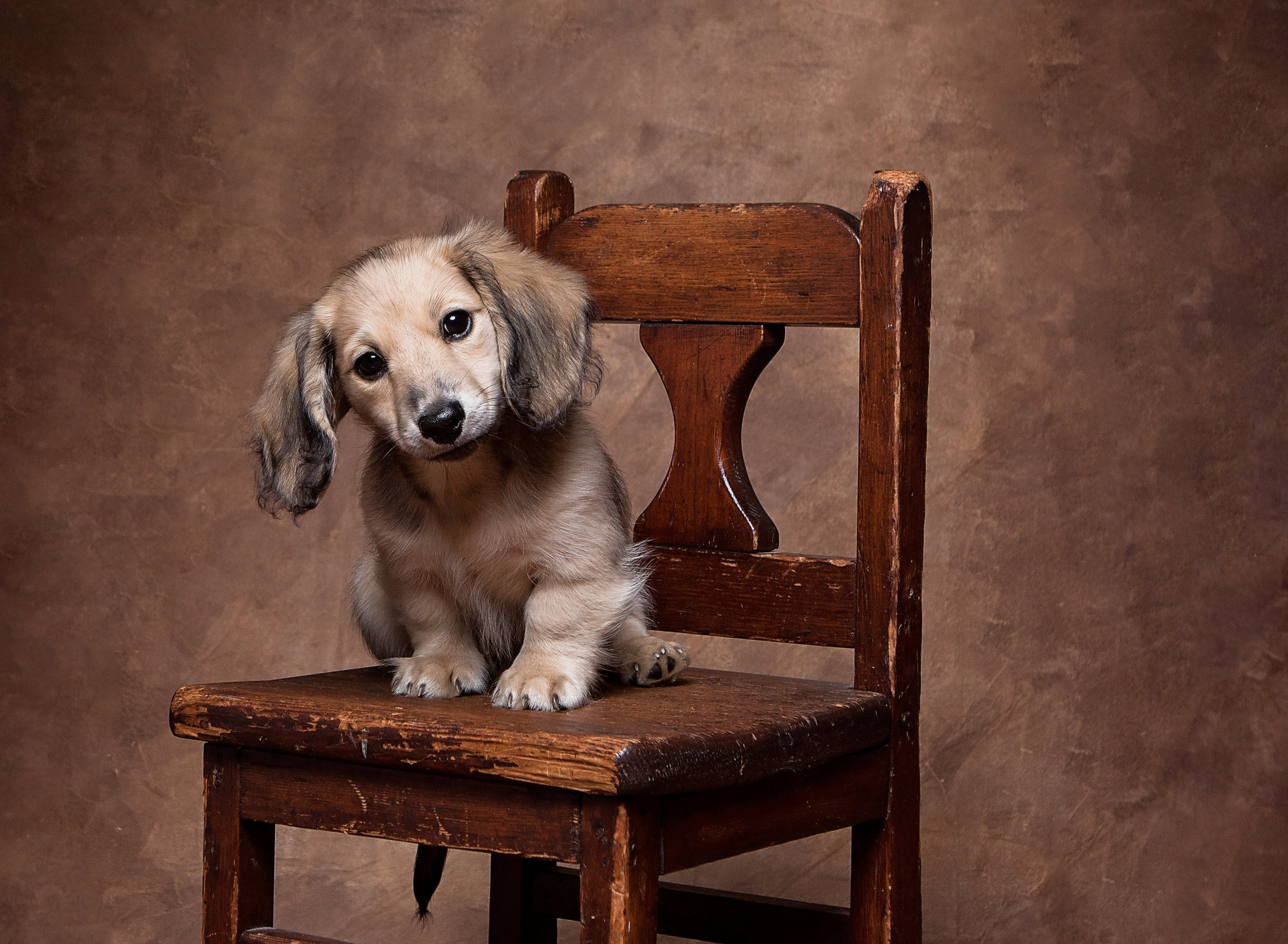 Doxie Pet Photographer Dog Photography Whitehall Photography.jpg
