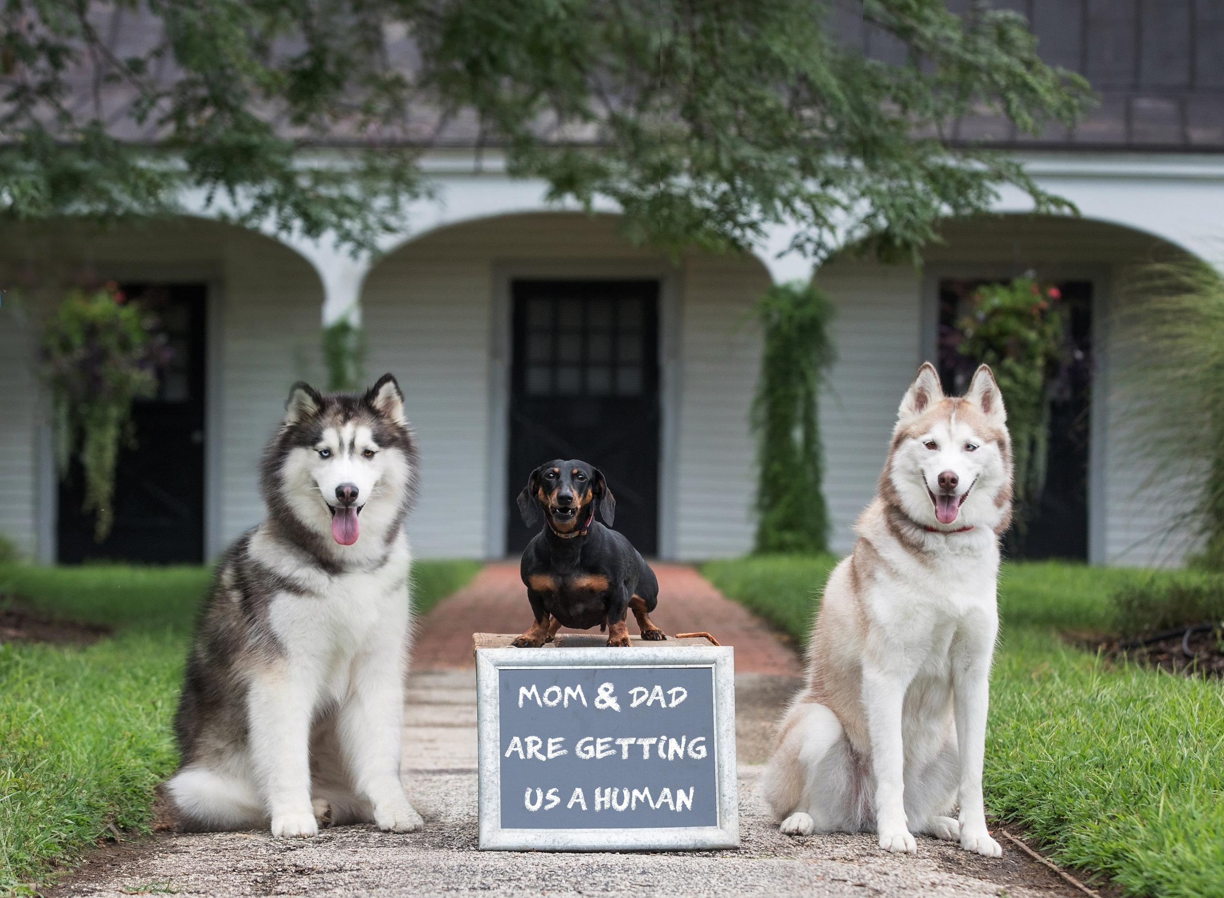 Dog Birth Announcment Dog Photography St. Louis Pet Photographer.jpg