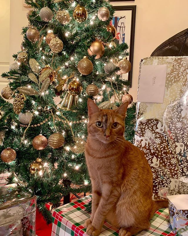 Athena is ready to open presents !  #catsofinstagram #christmascats #christmasdecor #christmastree