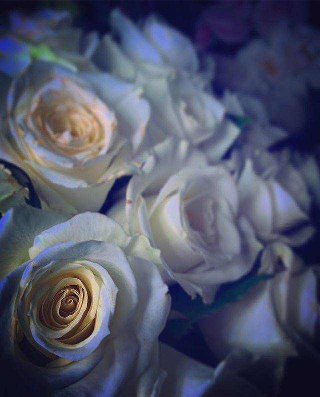 The Escimo! #marsongarden #white #roses #wedding #florist #lifestyle #nyc #brooklyn