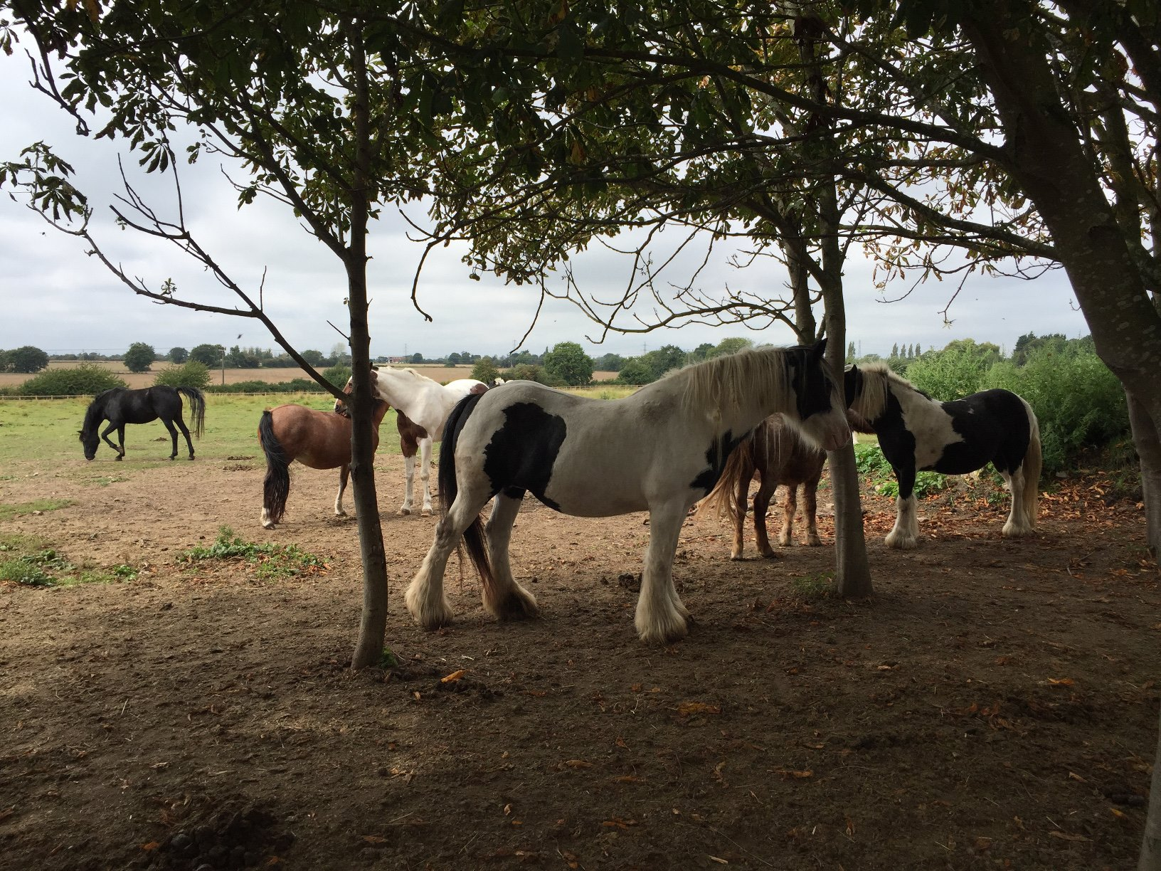 horses gathered.jpg