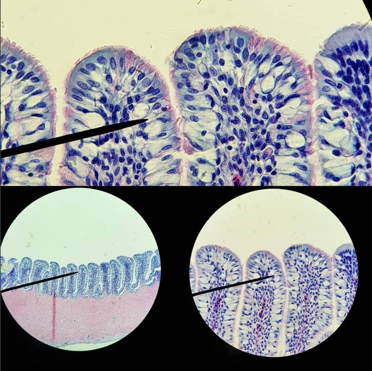 Cells.JPG