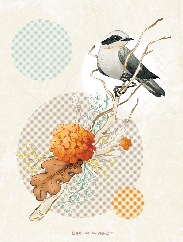 Un uccellino così carino con un nome tanto buffo come il Culbianco. - Sto leggendo una piccola raccolta di racconti scritta da Mario Rigoni Stern intitolata