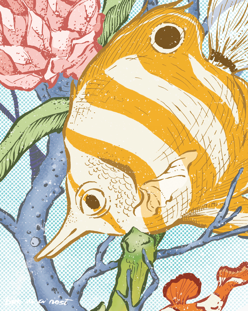 butterflyfish_1.jpg