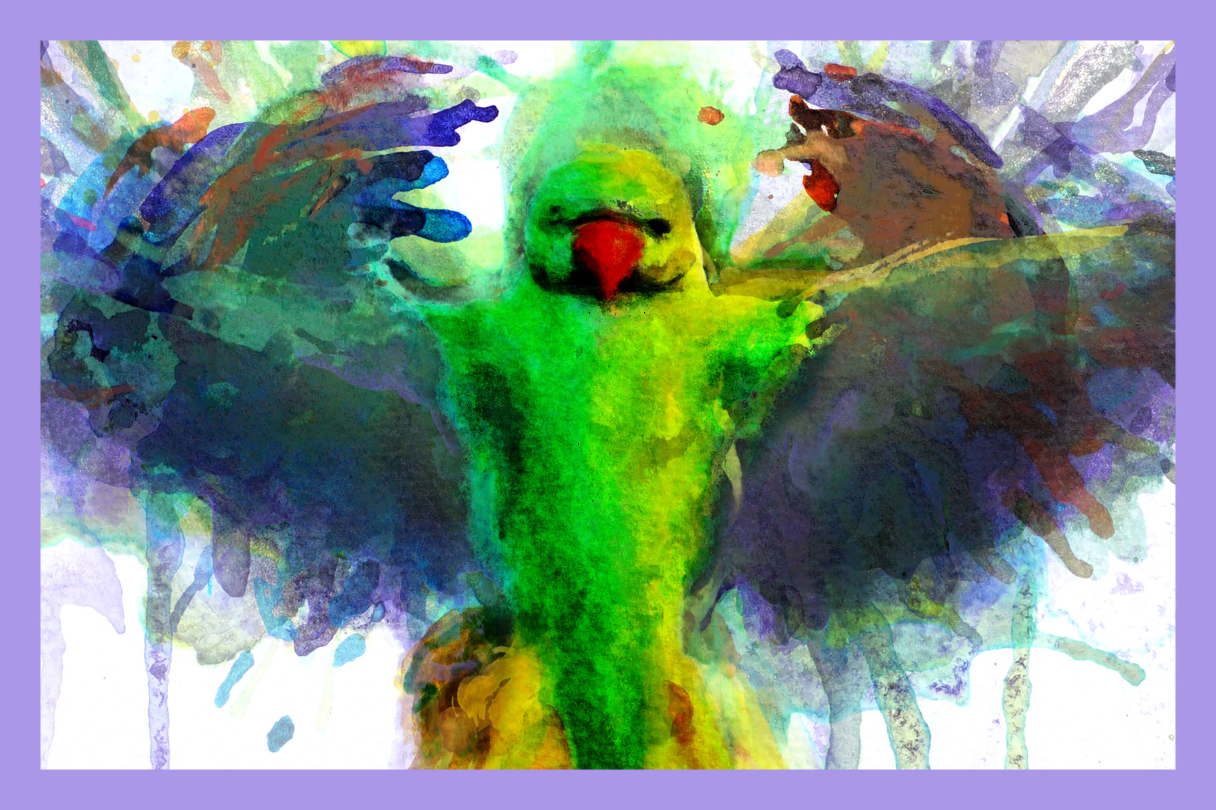 Dynamic Parakeets - Limited collector's edition prints