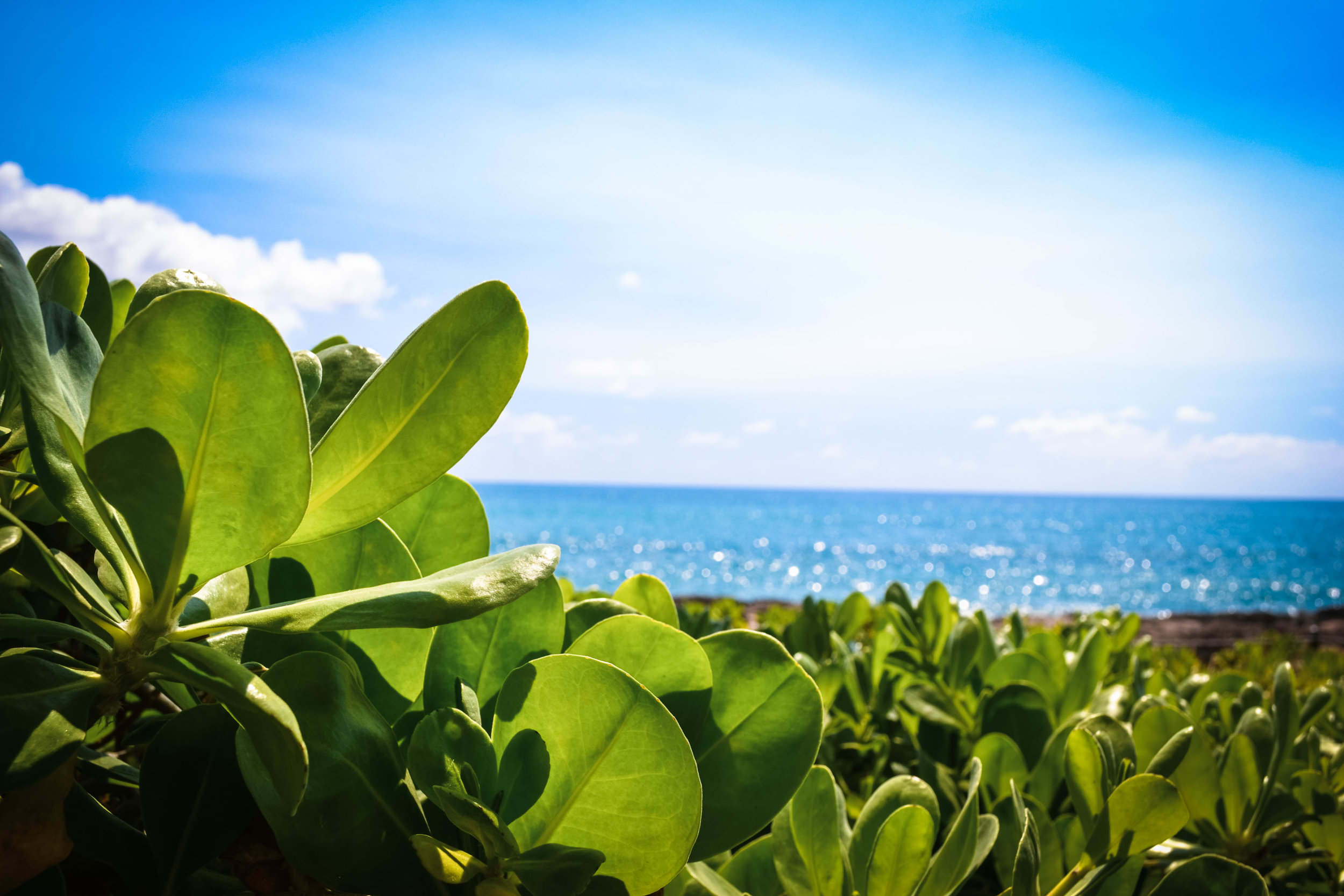 sea view.  honolulu. hawaii. usa.