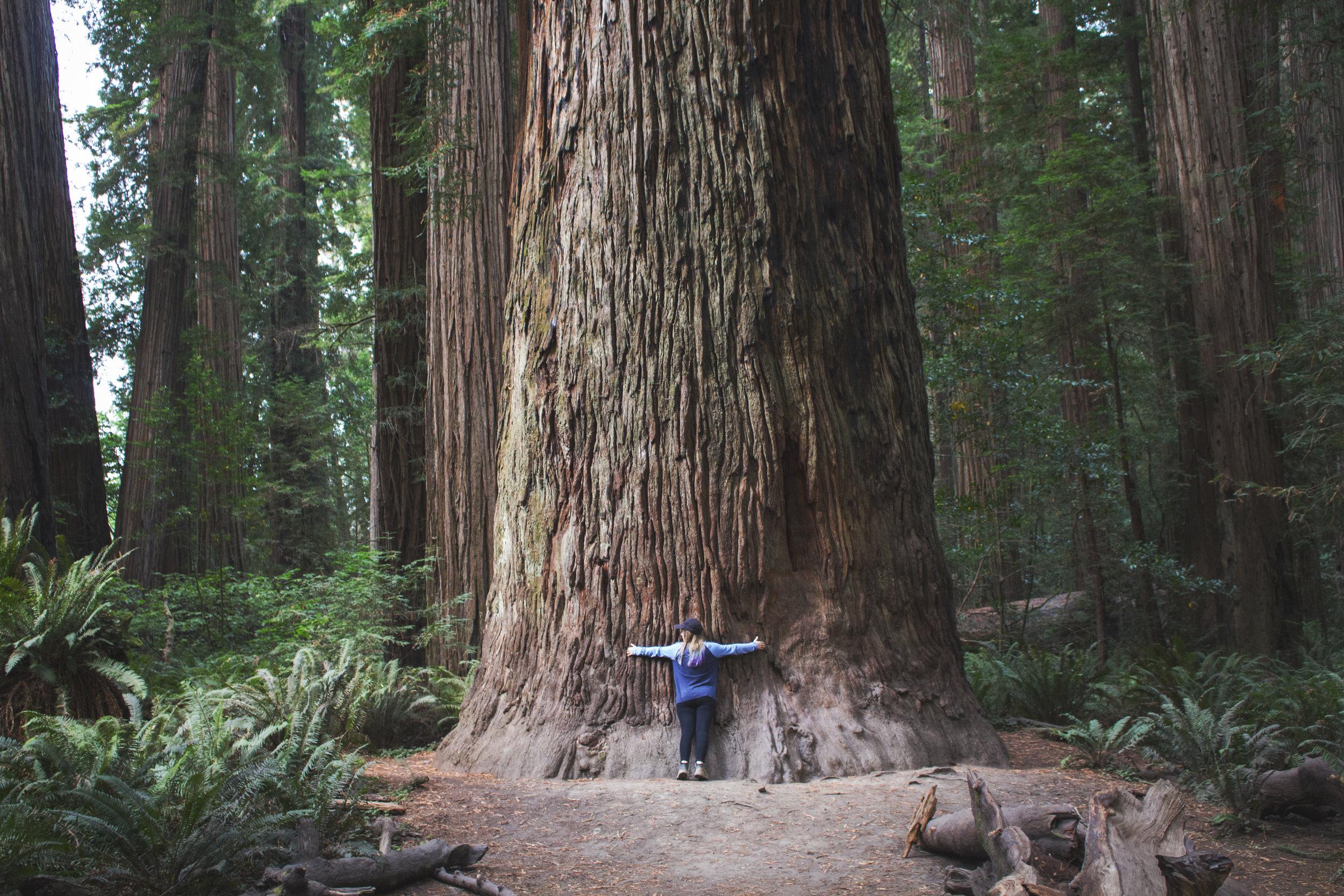 The Redwoods - adventures