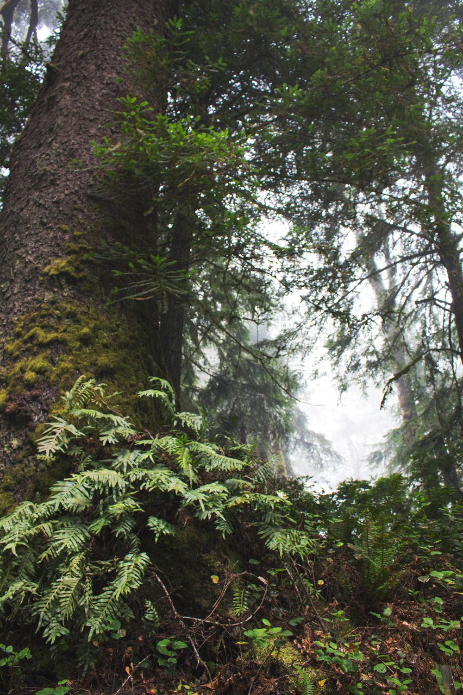 2-Redwoods-2017_099.jpg