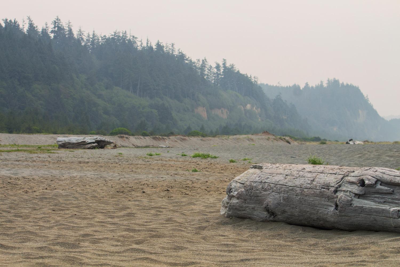 2-Redwoods-2017_053.jpg