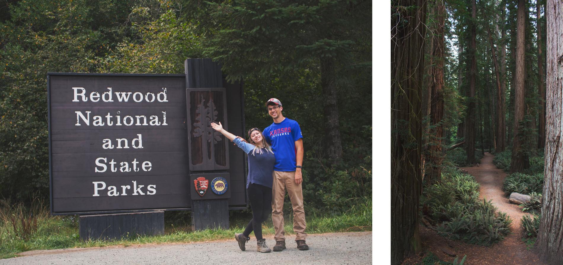 SBS Redwood 3b.jpg