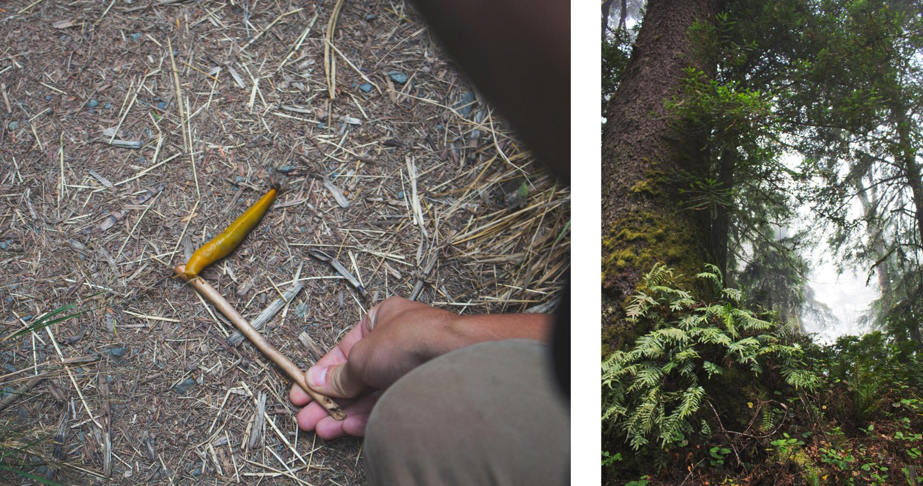 SBS Redwood6.jpg