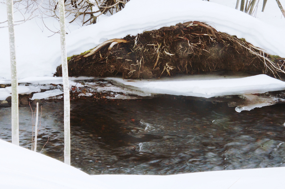 The creek in thaw