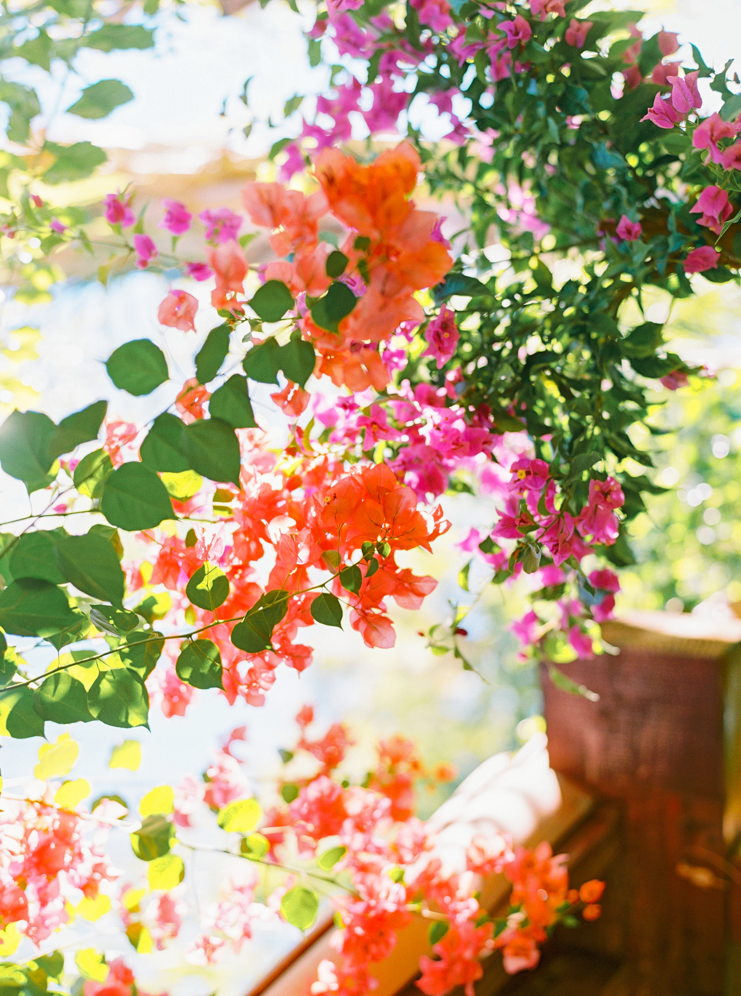 BOUGAINVILLEA WEDDING