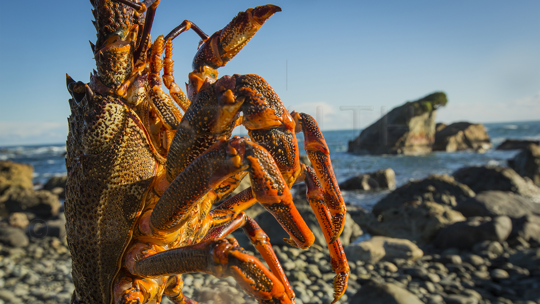 Crayfish 1_1500_W.jpg
