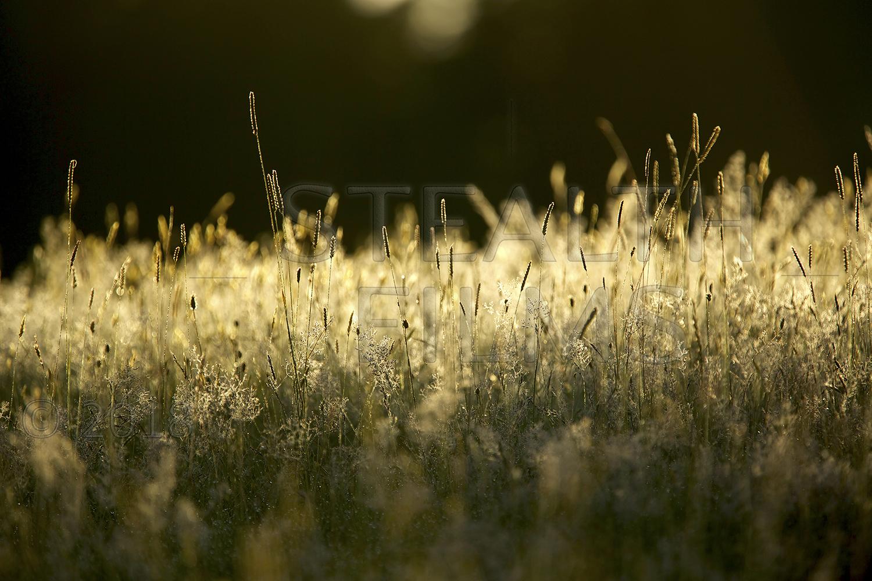 Grass-1500_W.jpg