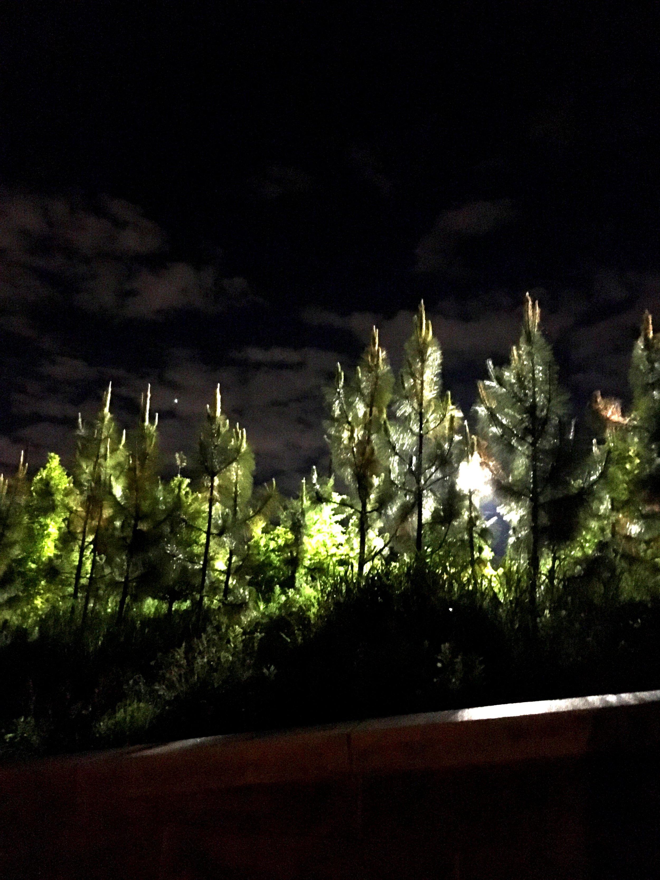 Beltline Moody Trees.jpg