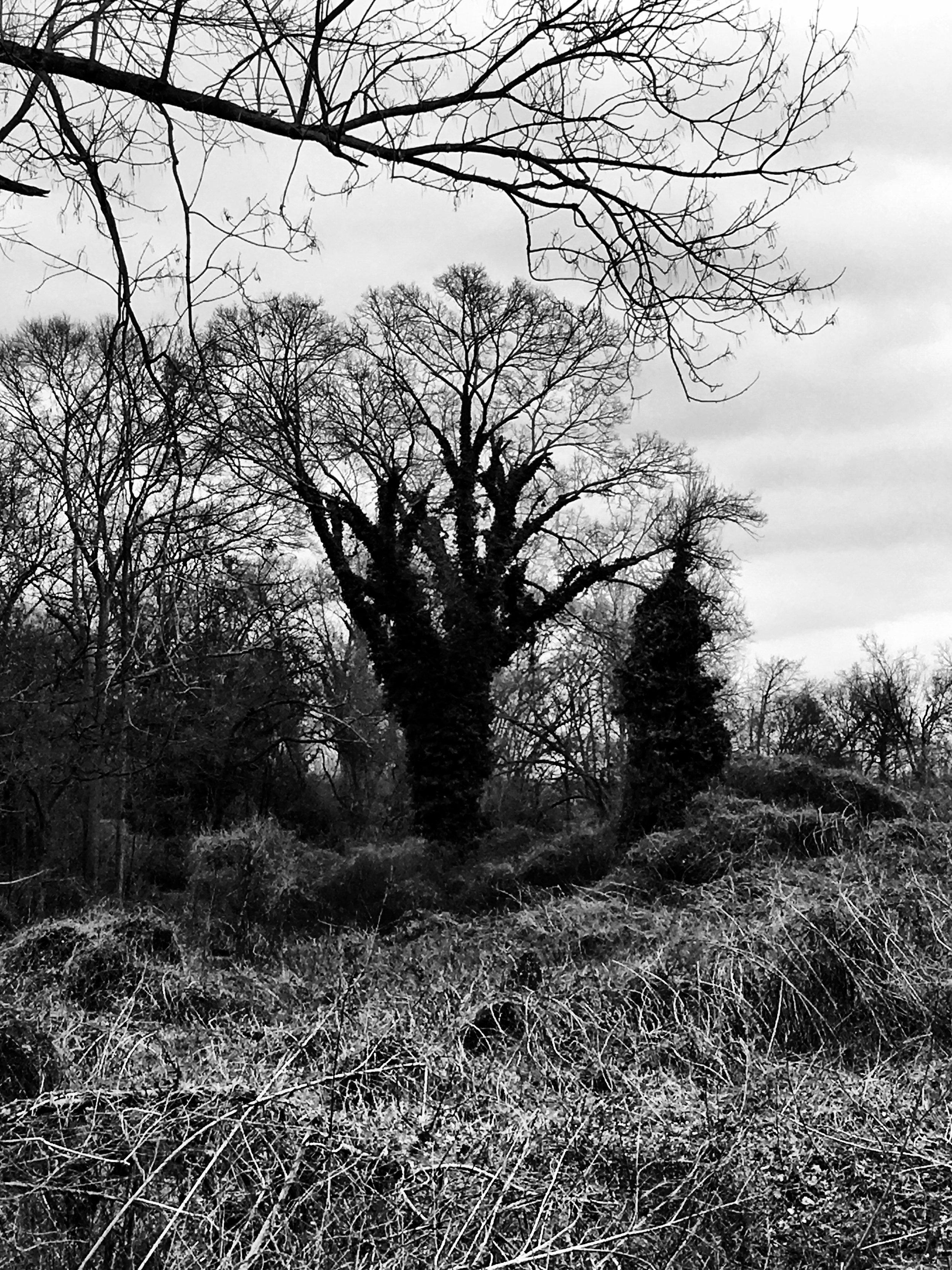 Kirkwood Black and White Winter Trees.jpg