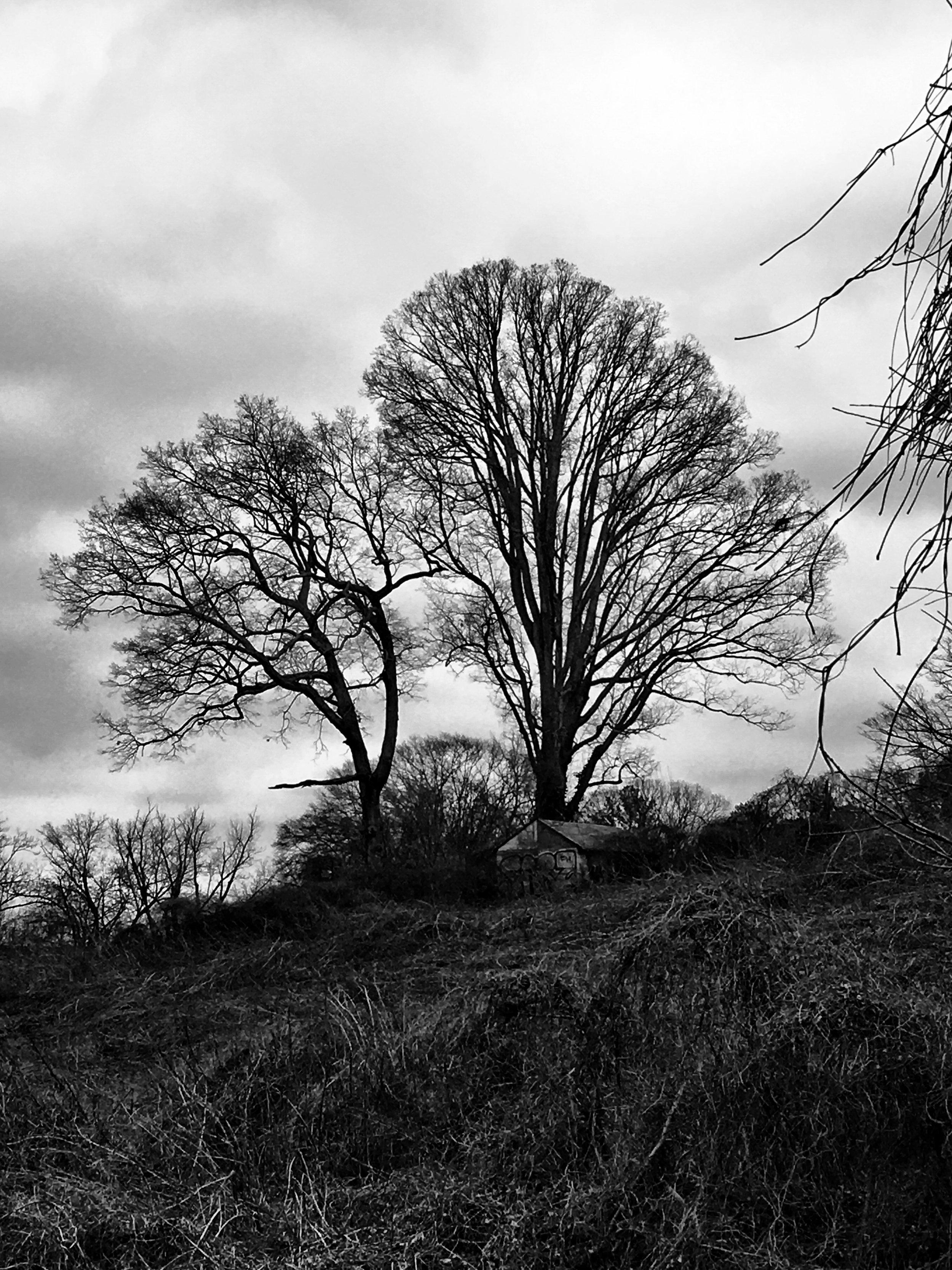 Kirkwood Winter's Day Tree.jpg