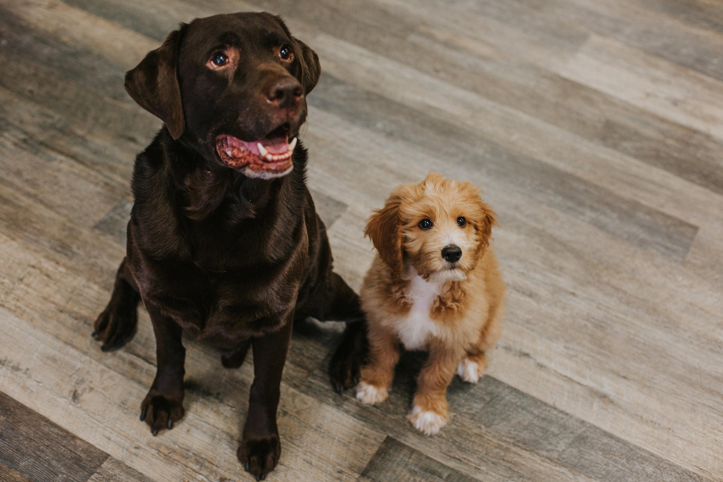 Jco-Natural-Pet-Eugene-Oregon-Puppies.jpg