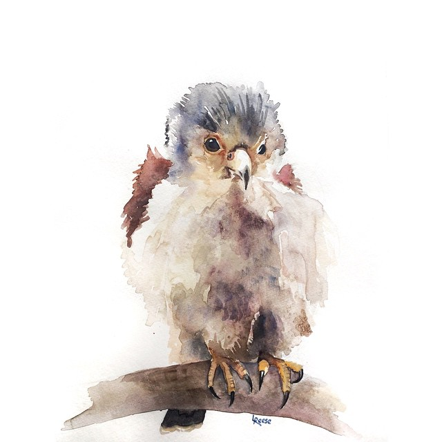Bird watercolor | ampersandmother.com