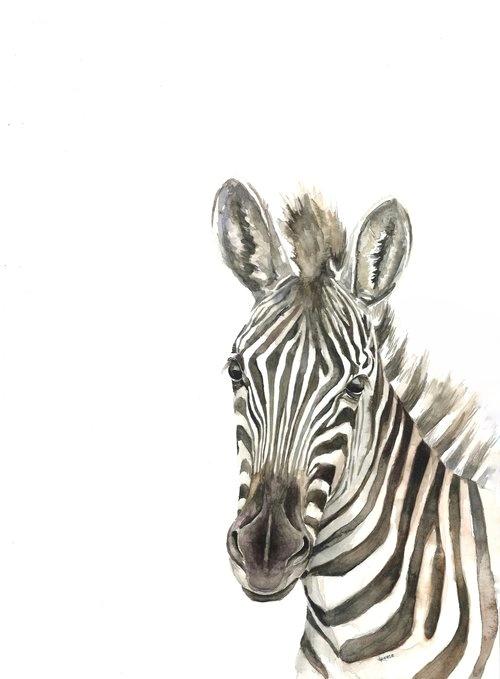 Zebra watercolor | ampersandmother.com