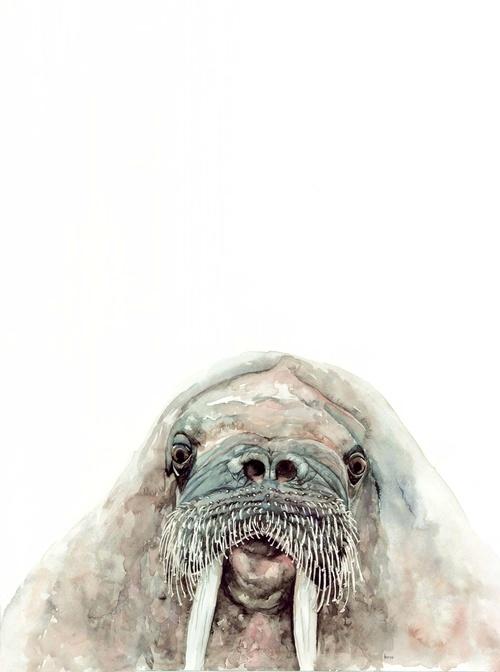 walrus watercolor | ampersandmother.com