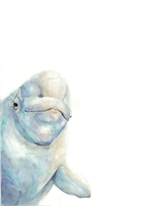 beluga watercolor | ampersandmother.com