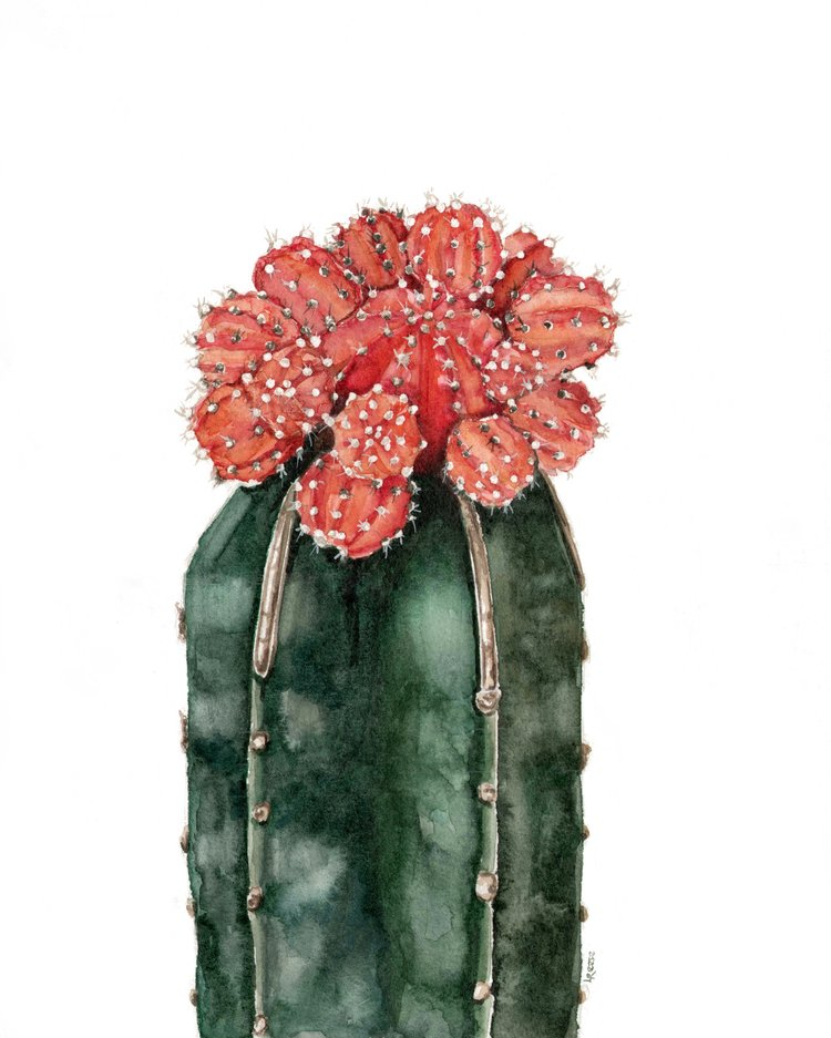 Moon cactus watercolor | ampersandmother.com