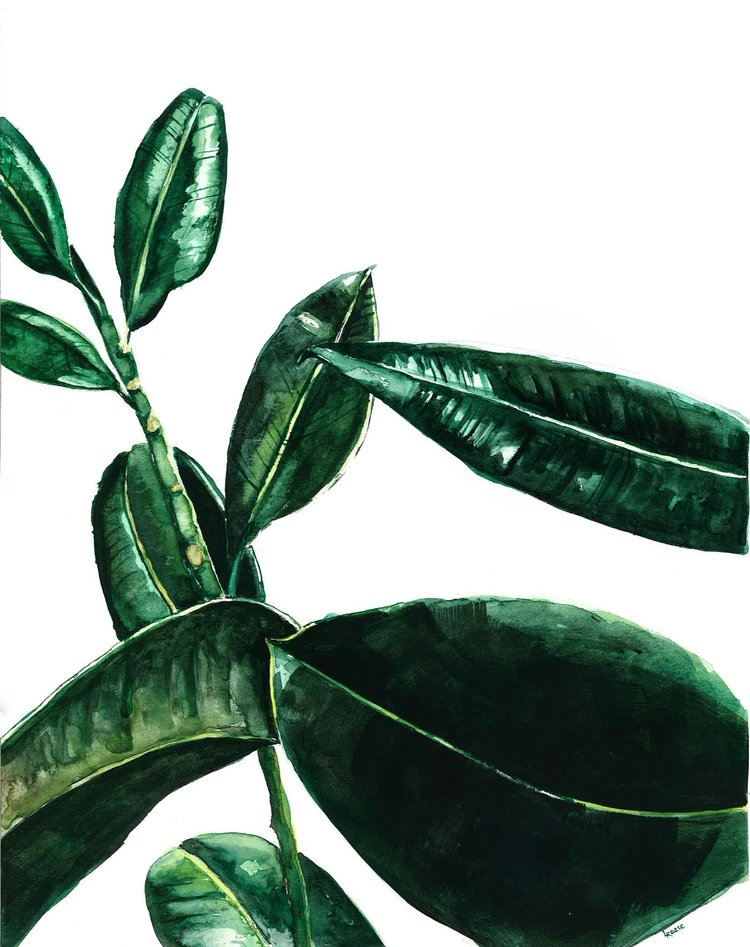 Rubber tree watercolor | ampersandmother.com