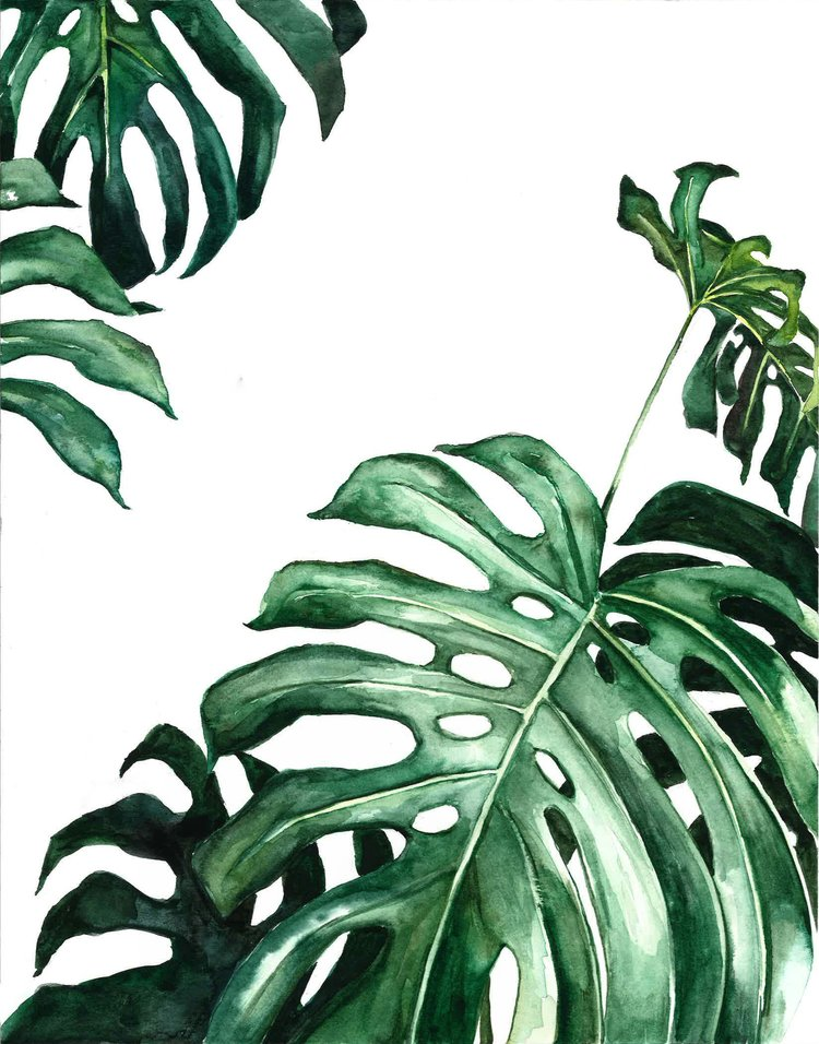 Monstera plant watercolor | ampersandmother.com