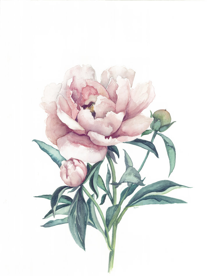 peony watercolor | ampersandmother.com