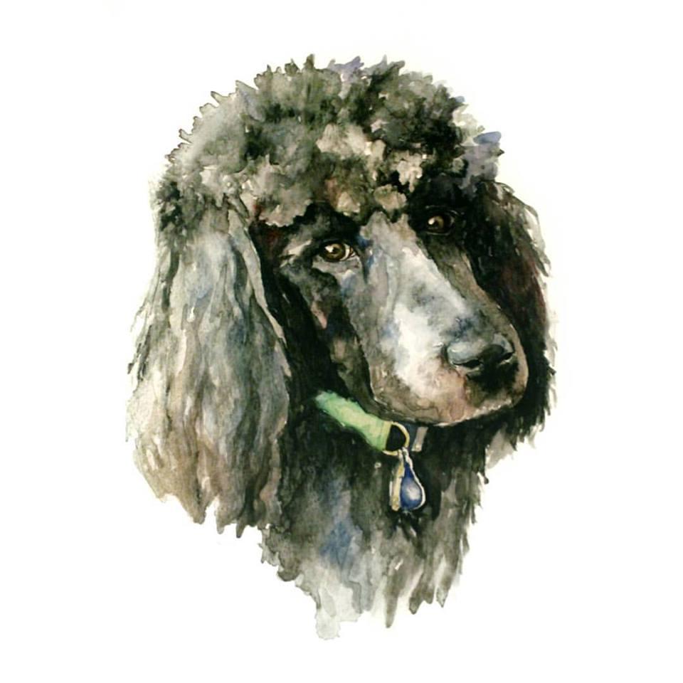 poodle watercolor | ampersandmother.com