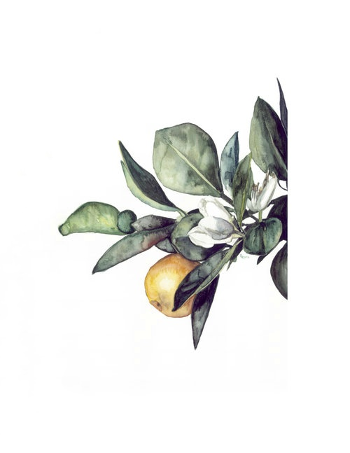 Watercolor orange blossom | ampersandmother.com