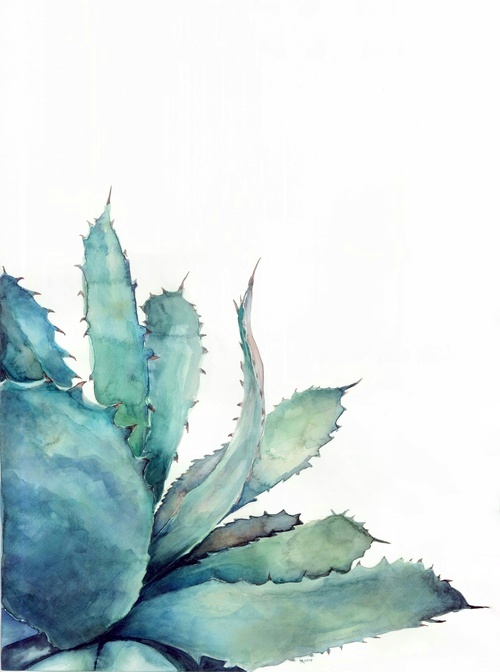 Watercolor aloe | ampersandmother.com