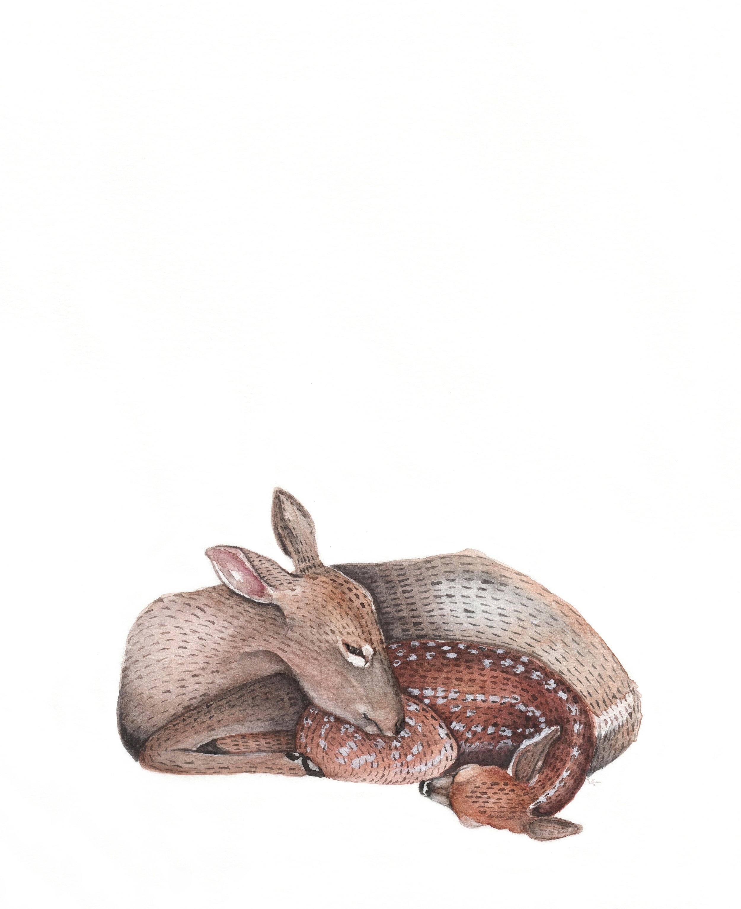 Fawn and Doe Watercolor | Ampersand Mother