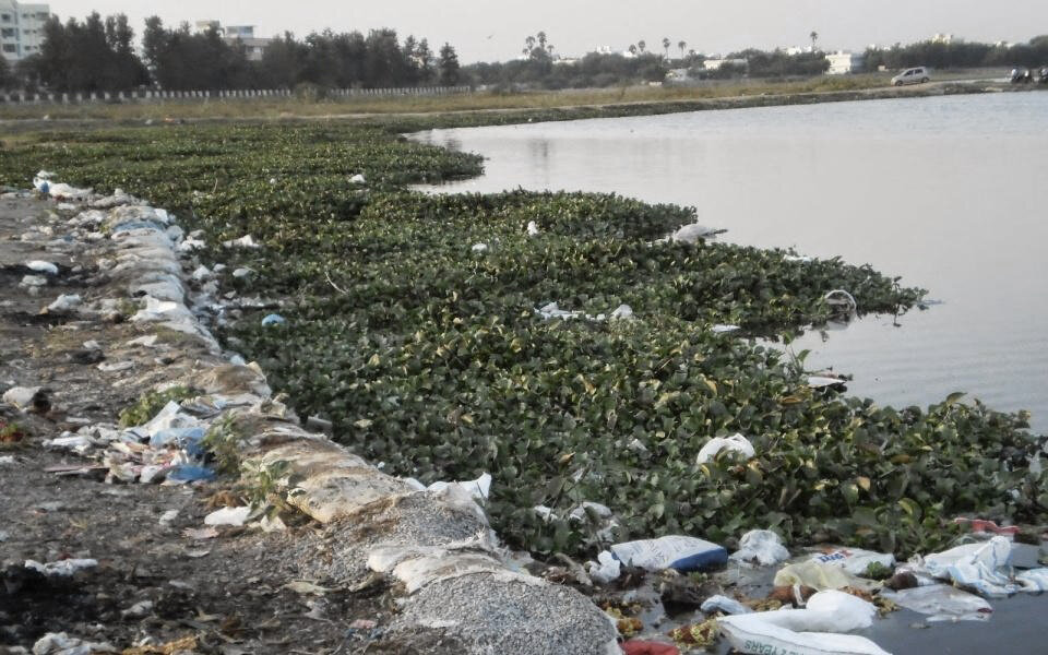Waste getting mixed with marine vegetation along the lake