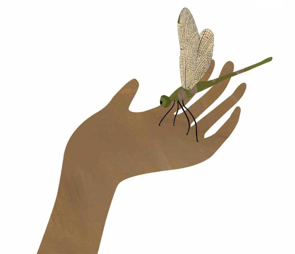 Dragonfly-hand.jpg