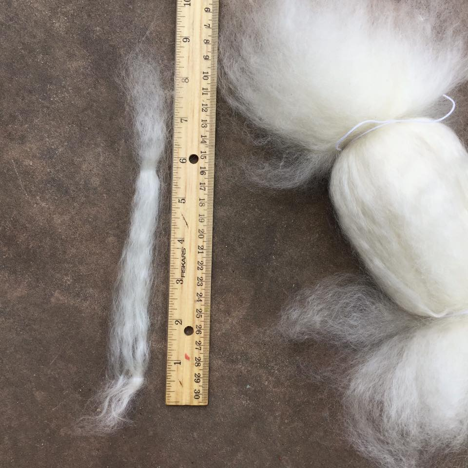 Dehaired fiber from Eowyn