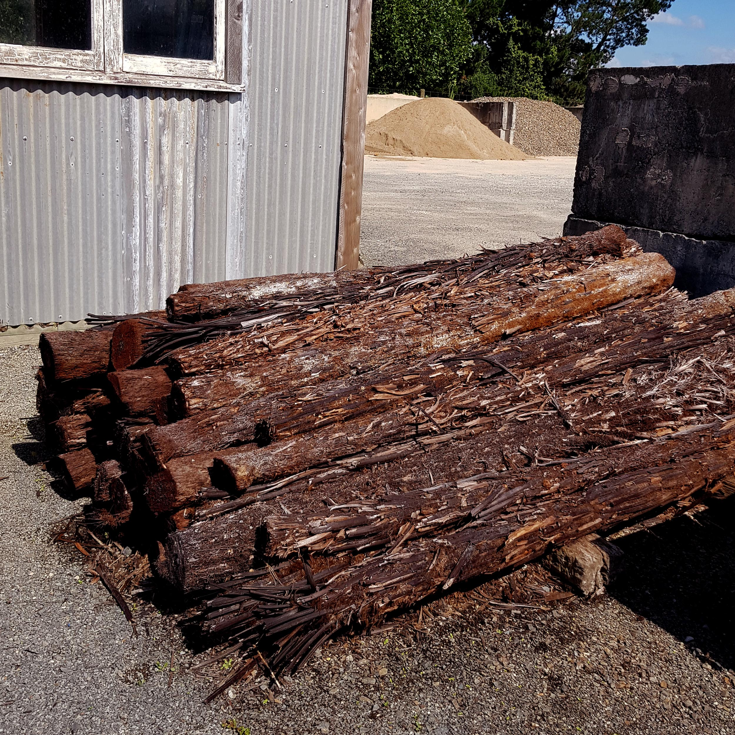 Ponga Logs 2.jpg