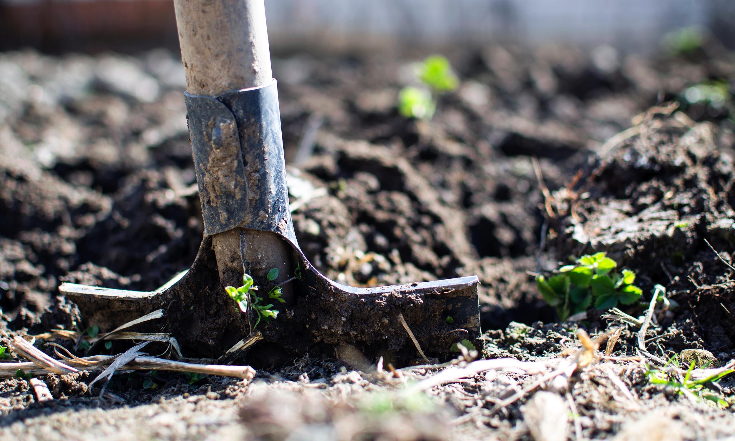 agriculture-backyard-blur-2962302.jpg