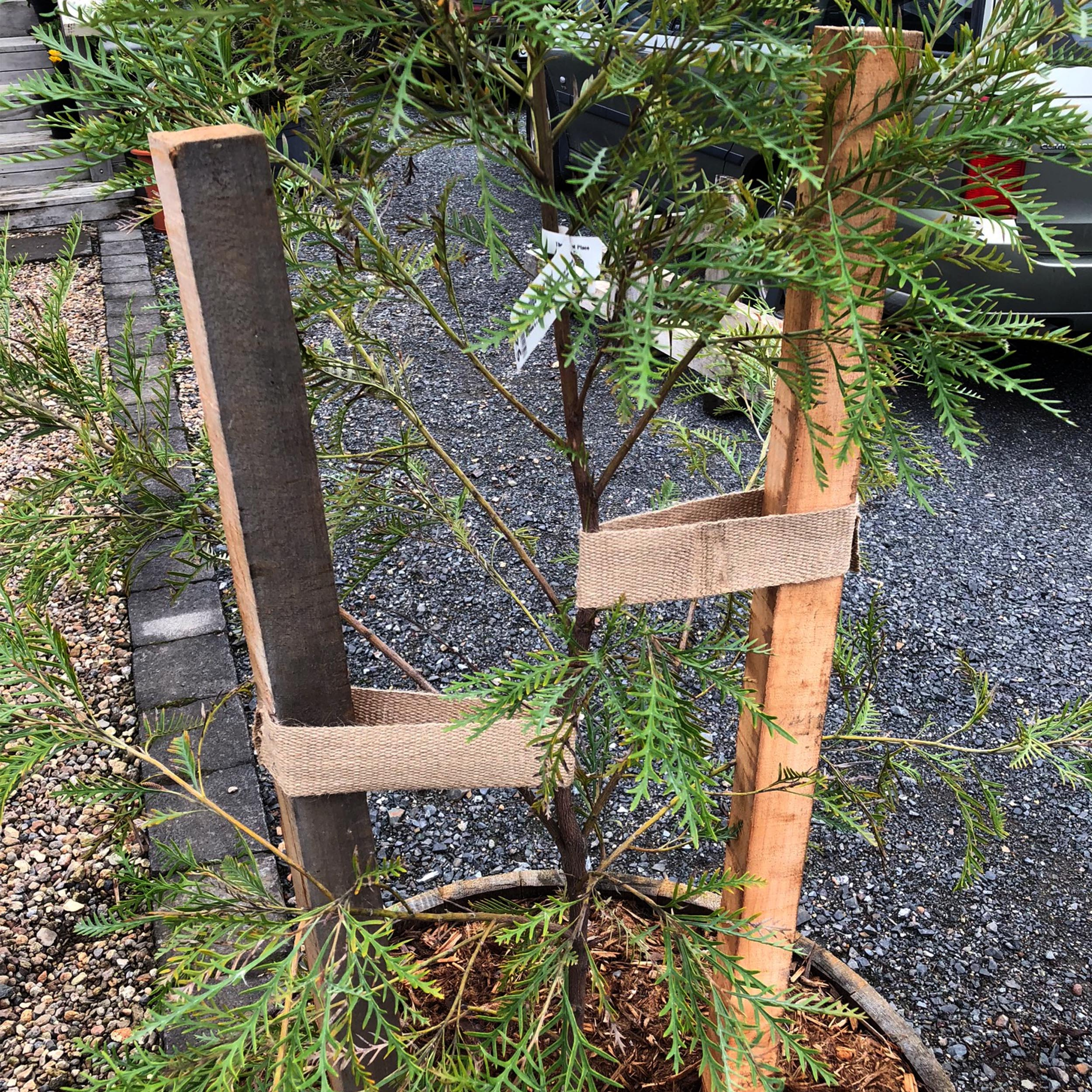 Tree Tie & Wooden Stakes